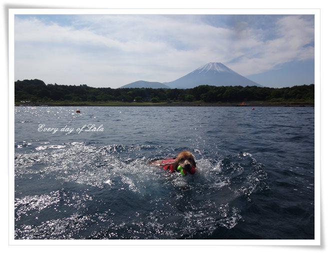 本栖湖にて初泳ぎ