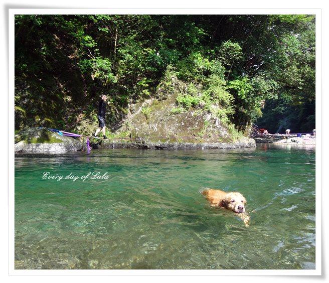 ララも泳ぐ