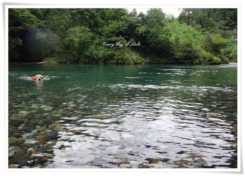 川で気持ち良さそうに泳ぐララ