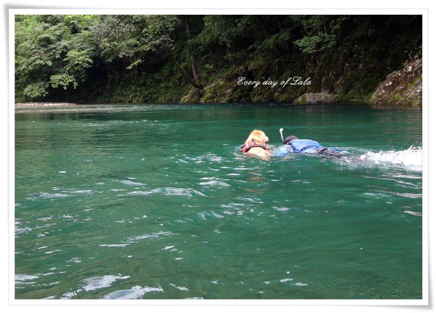 仲良く一緒に泳ぐ