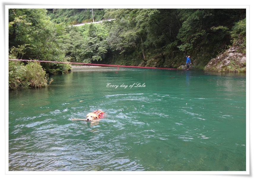スラックラインする人と泳ぐララ
