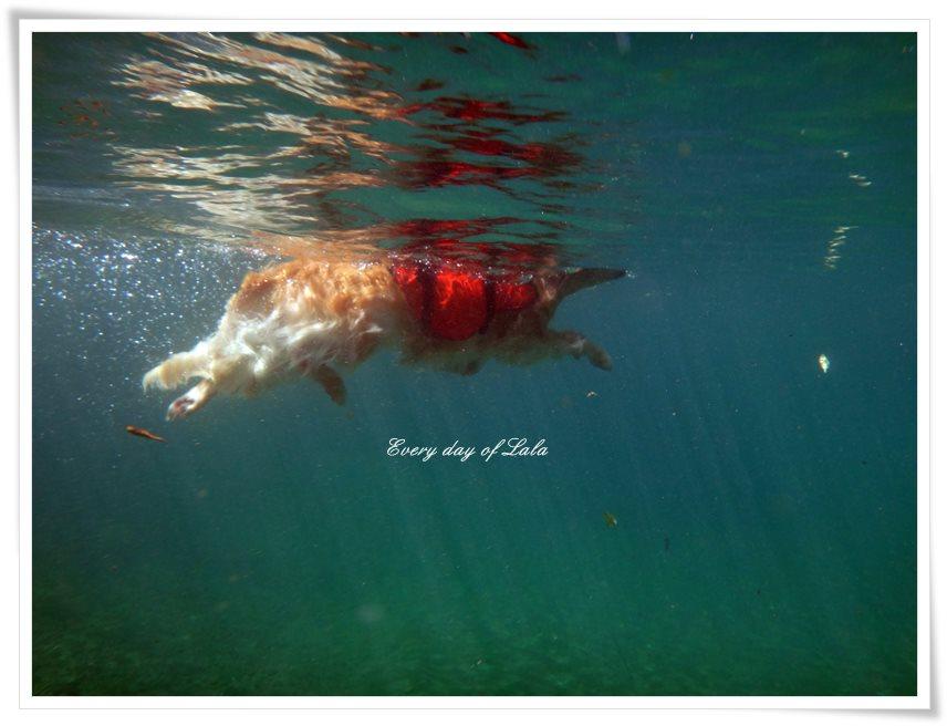 水中から見るララ泳ぎ2