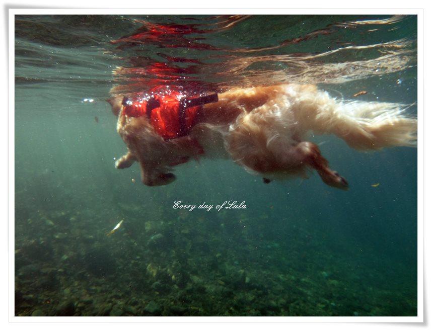 水中から見るララ泳ぎ1