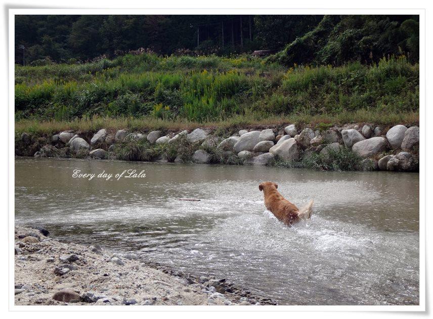 阿木川へ遊びに来ました