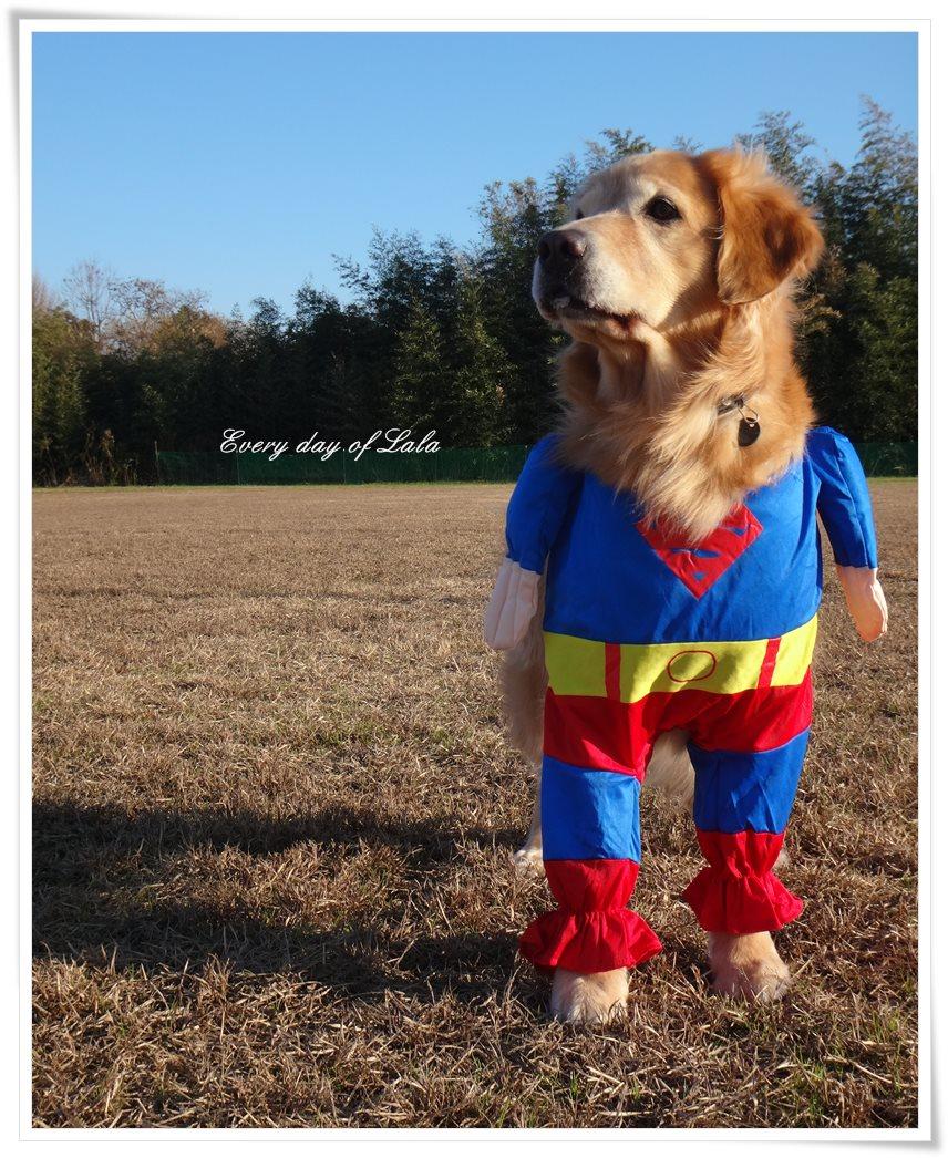 スーパーマンララがきた!