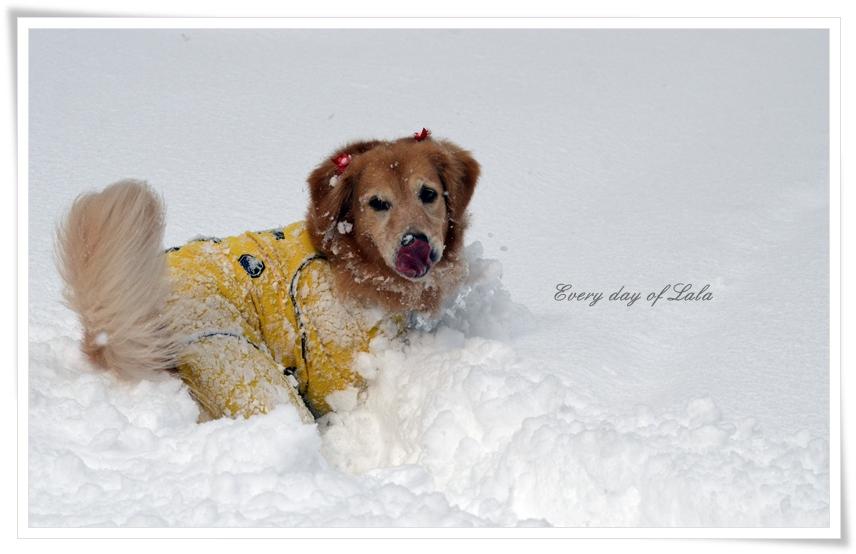 雪遊びを満喫中~