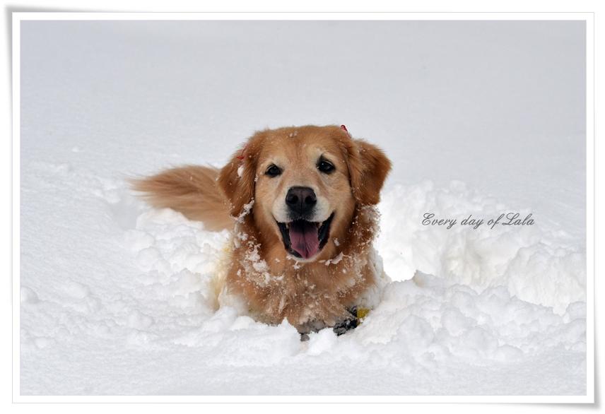 雪遊びたのしいね