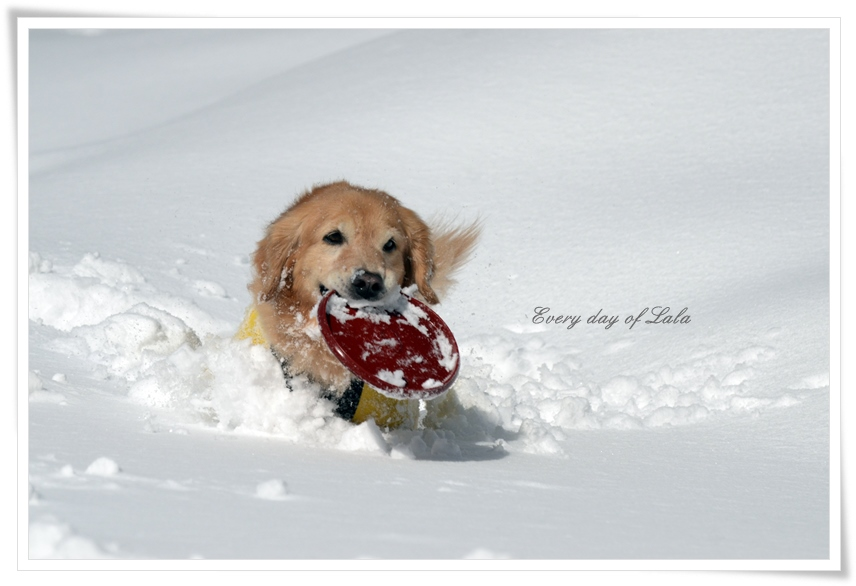 フリスビーで雪遊び