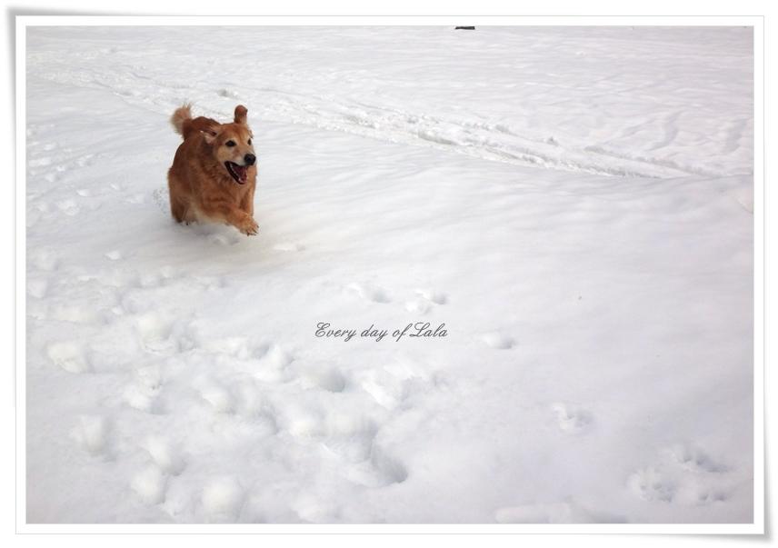 雪の上で思いっきり走る