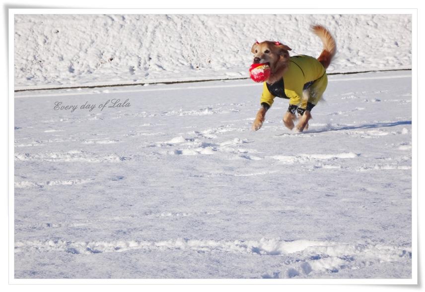 雪上を走る