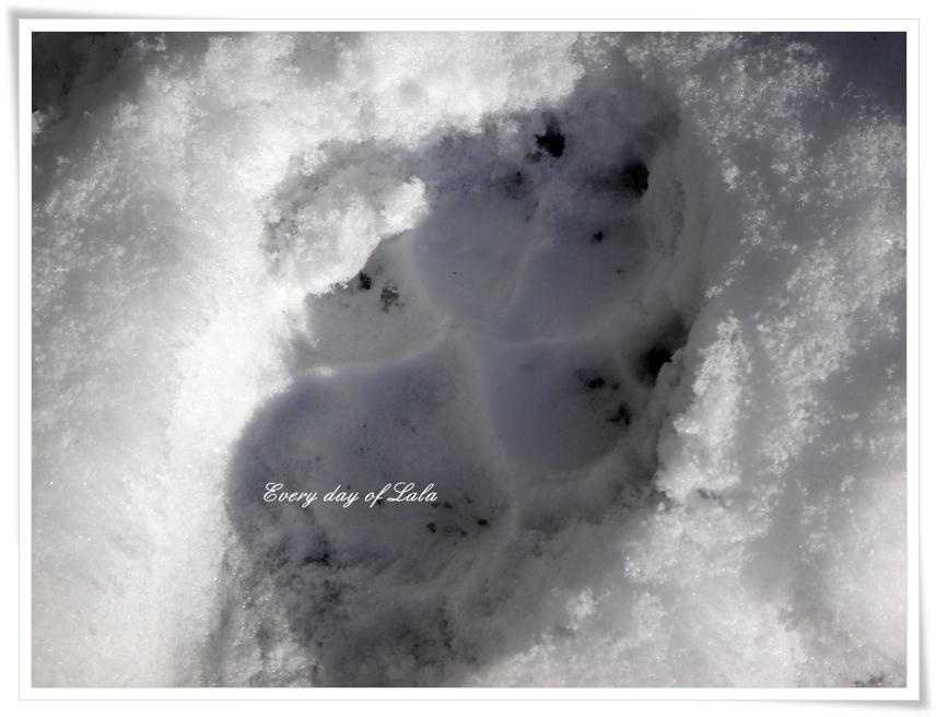 雪上の肉球足跡