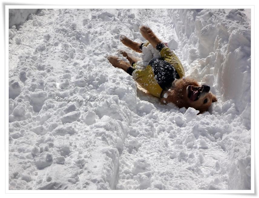 雪のうえでゴロスリだ