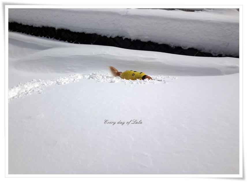 雪の中へ埋まる
