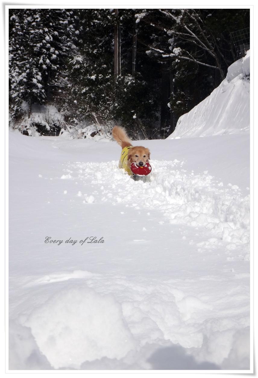 雪遊び楽しいね~3