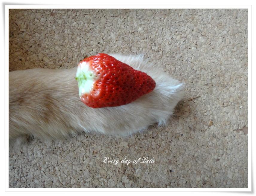 イチゴとララの手