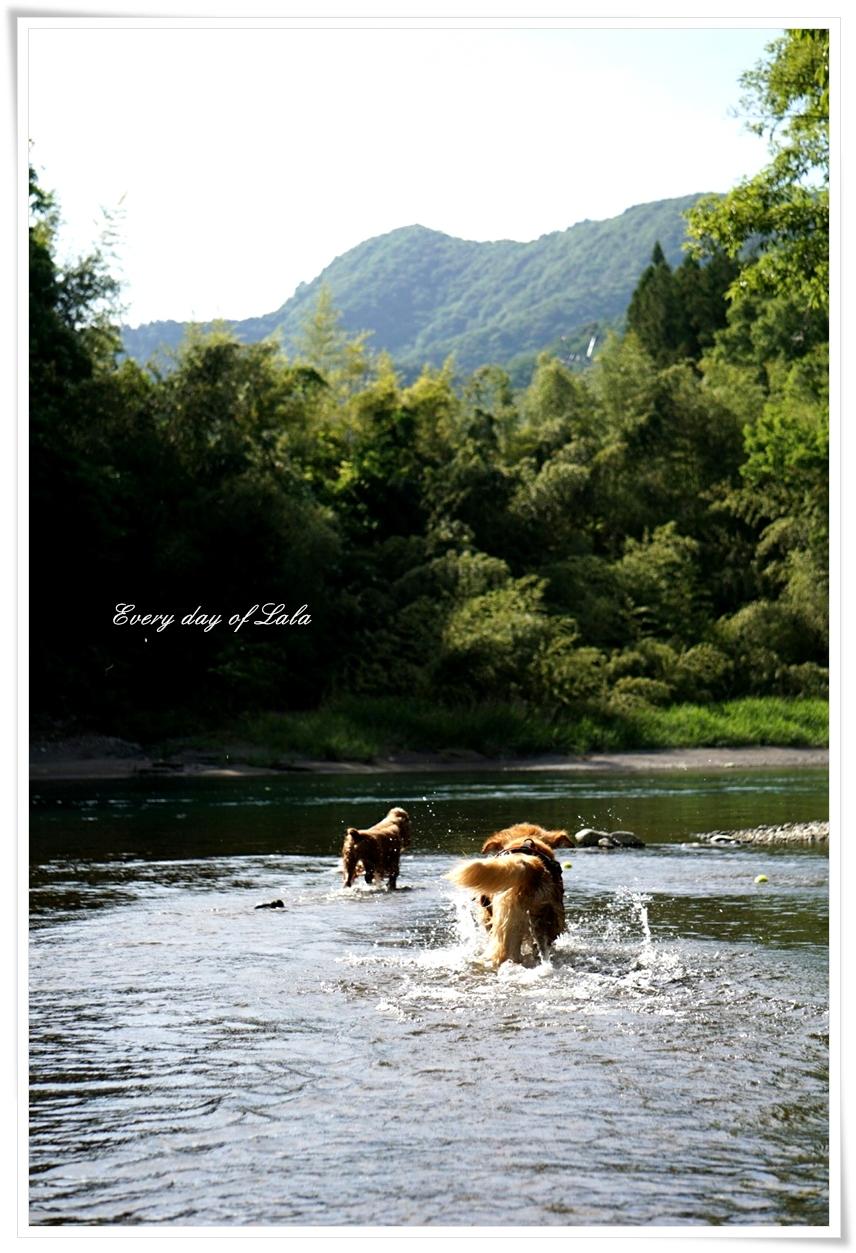 ハルちゃんと川遊び1