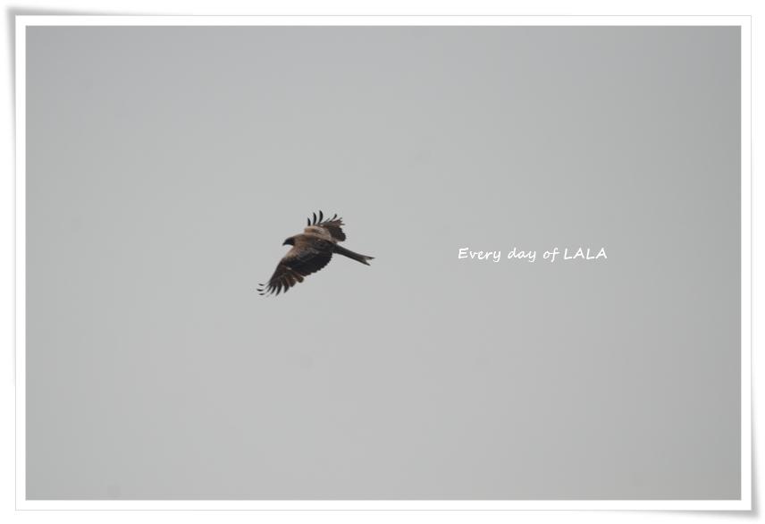 とびが飛ぶ