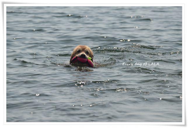 ララの初泳ぎびわこにて