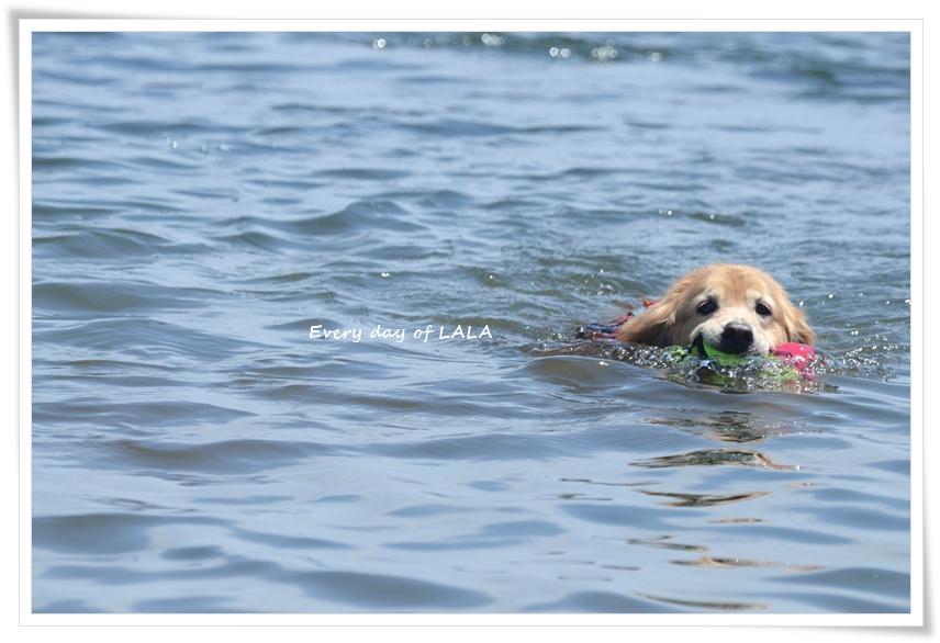 気持ち良さそうに泳ぐ
