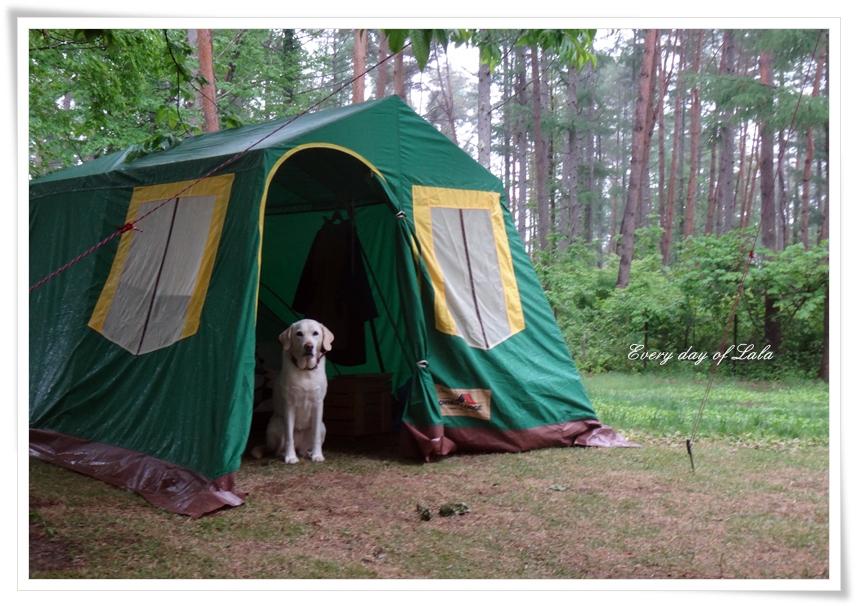 お洒落なテント