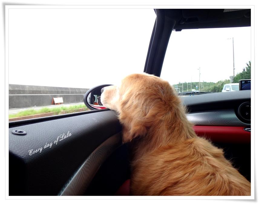 miniに乗ってドライブ