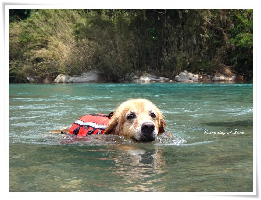 川でスイスイ泳ぐララ