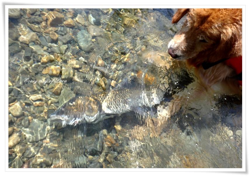 お魚発見!