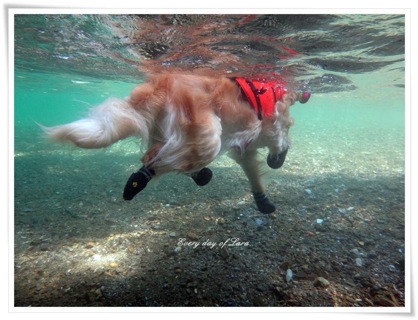 水中で見ると
