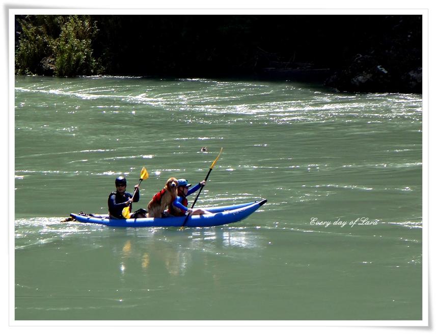 水量の多い長良川をスイスイ