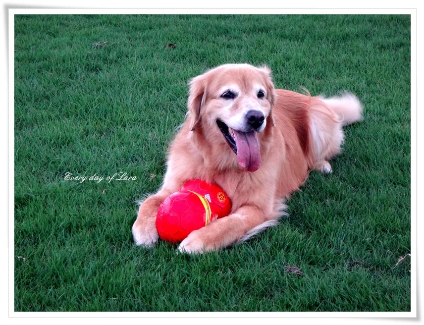 愛用してるマイボールはやっぱりいいね!