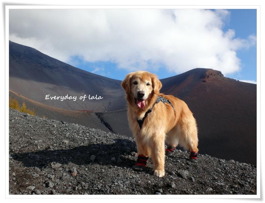 富士山散策を楽しむ