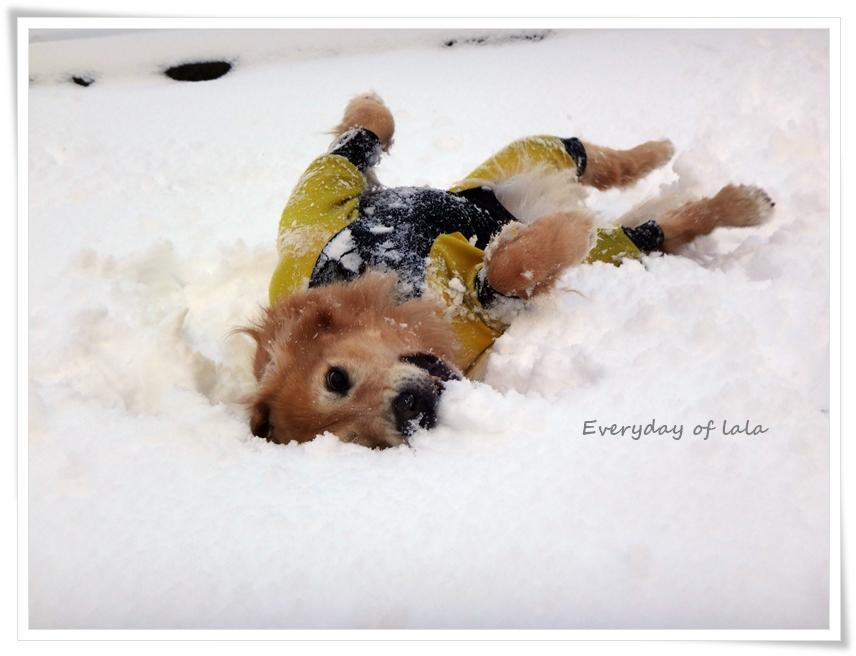 雪上のごろすりはひんやり