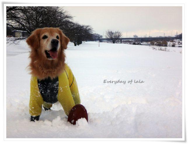 さあー雪遊びでもしましょうか!