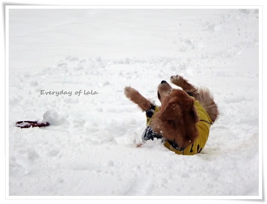 雪上のごろすり中