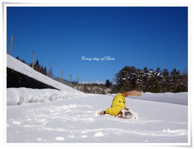 雪遊びでゴロスリを