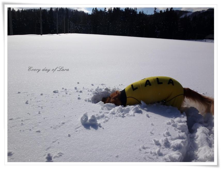 雪の中へ頭突っ込みます