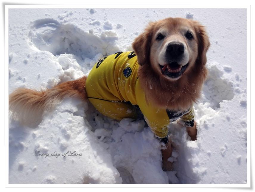 ニコニコ雪遊び楽しそう