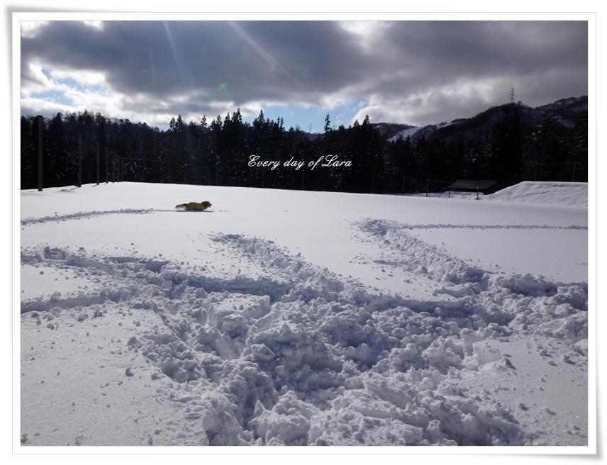 雪遊びいっぱい走るよ~