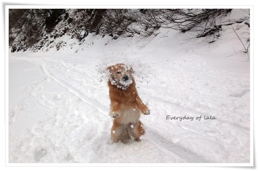 雪玉キャッチする