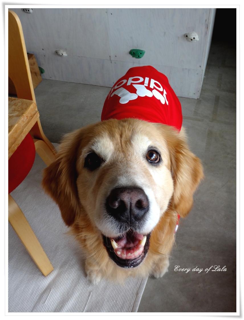 真っ赤なadidog似合いますか?