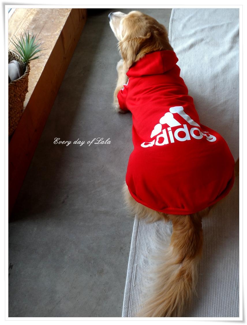 真っ赤なadidog着てみました2