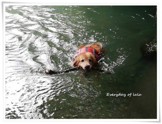 川で気持ちよく泳ぐララ