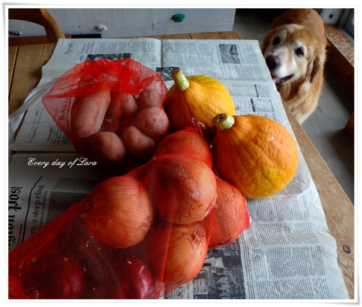 コリンキーと野菜