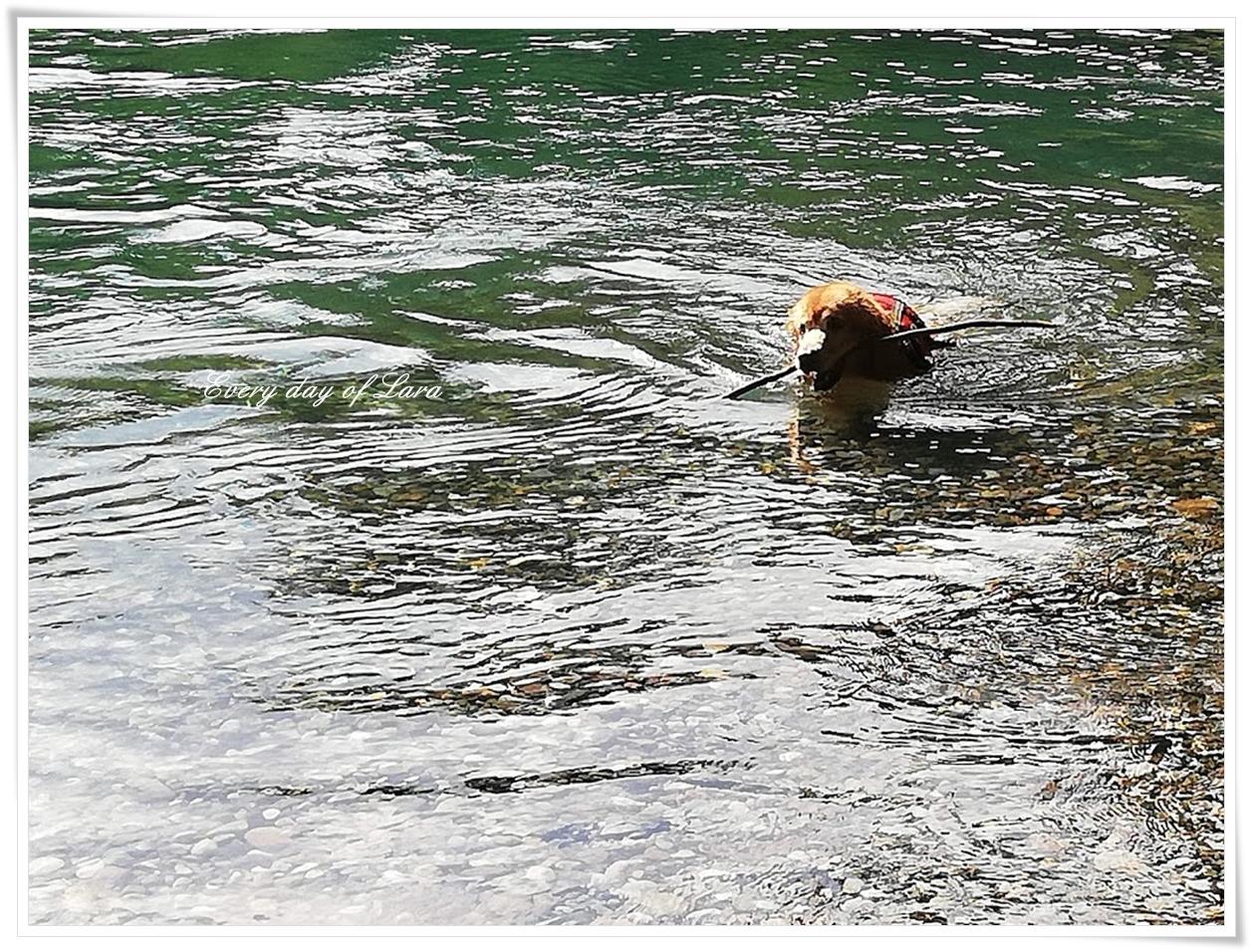 川で泳ぐララの楽しそうな姿