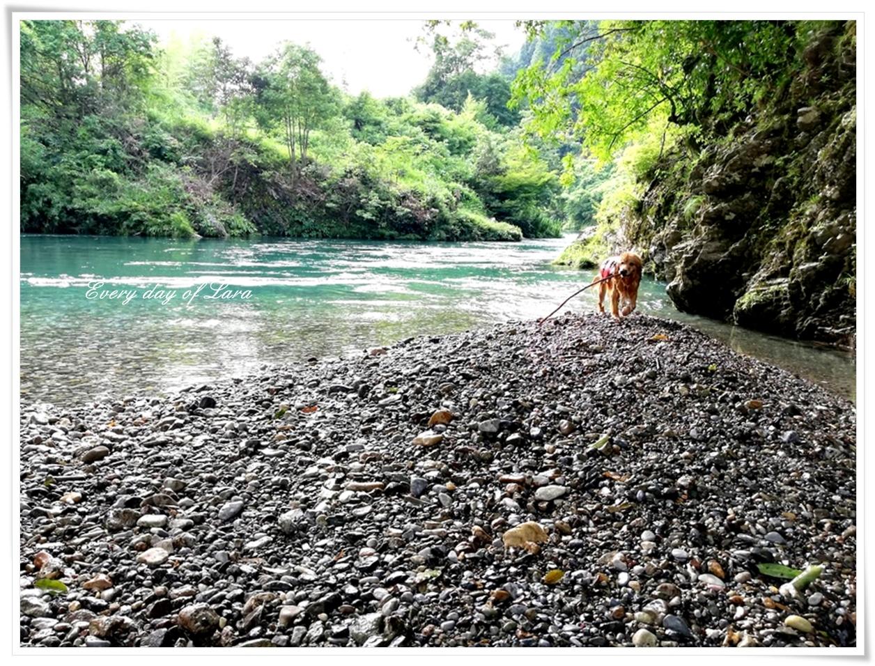 川で遊ぶララ本当に嬉しそうです