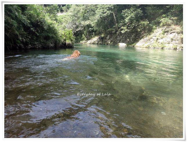 いつもの川へ来てみました。