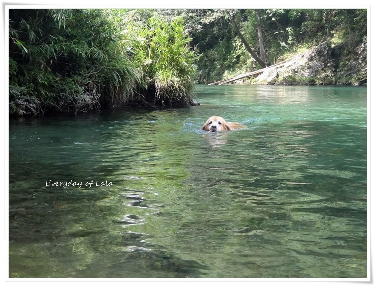 暑かったので川へキタ!