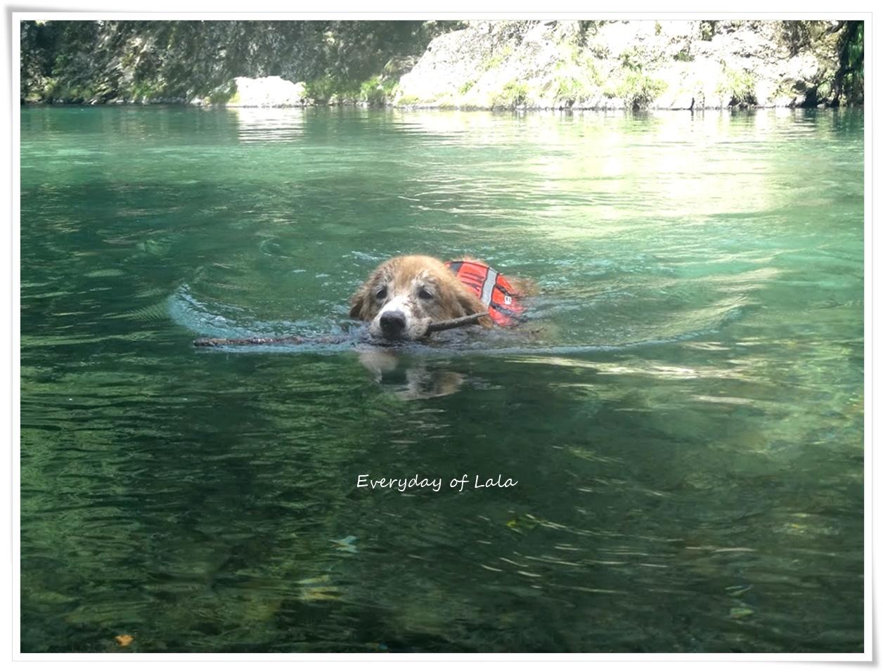 すいすいと泳ぐ♪