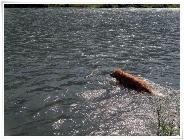 粕川へ川遊び