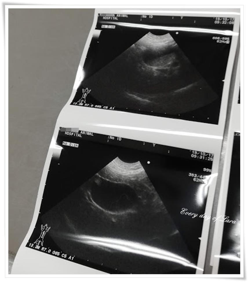 2019年10月腹部エコー検査